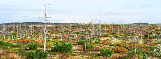 秋のツンドラ、青い曇り空で緑赤黄色草ブッシュ - ツンドラ ストックフォトと画像