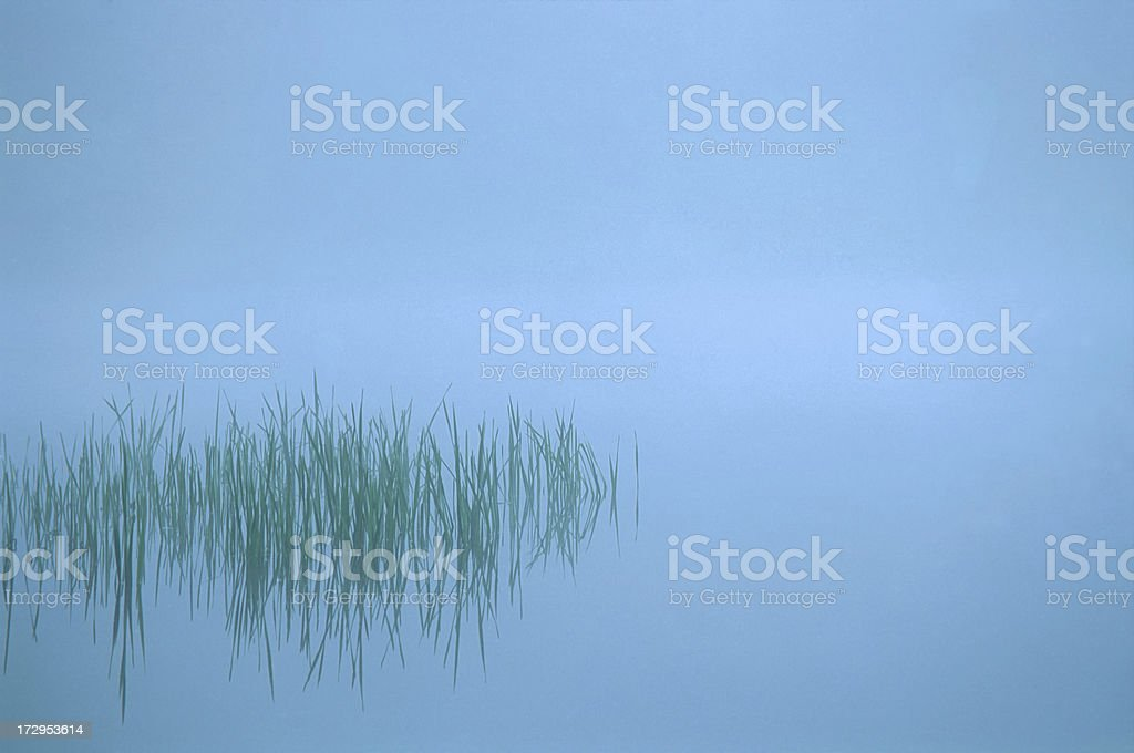 Green Reeds and Still Blue Water royalty-free stock photo
