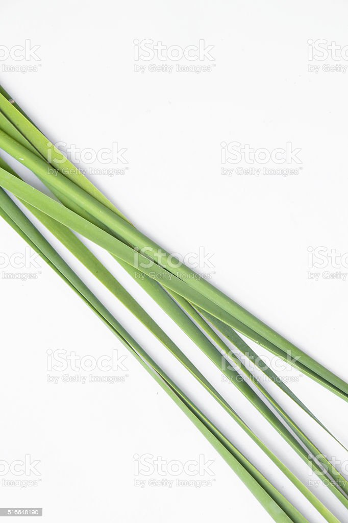 Green reeds background stock photo