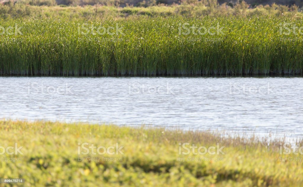 green reeds on Lake Outdoors stock photo