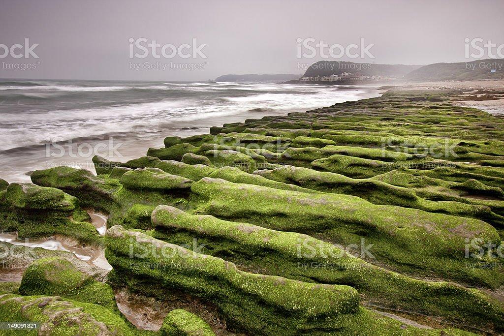 green reef stock photo