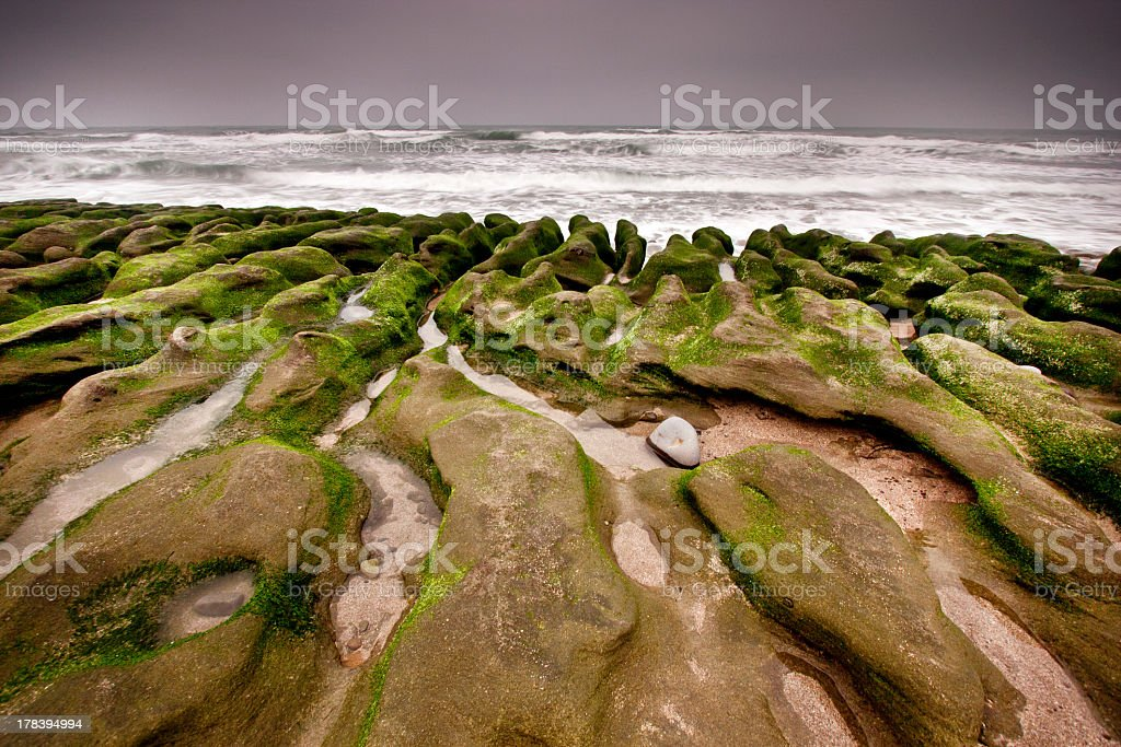 green reef royalty-free stock photo