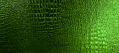 Full frame shot of green reptile skin texture.