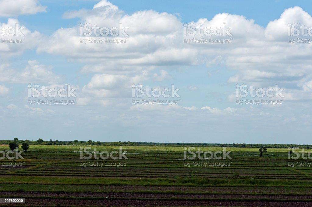 Green rice field landscape stock photo