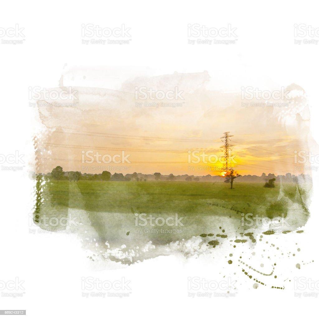 Green rice field. stock photo