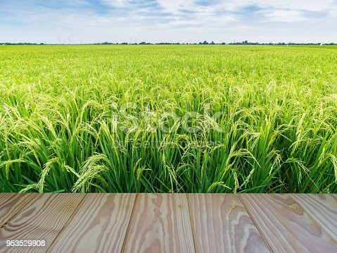 Green rice field with wooden floor foreground and blue sky background.