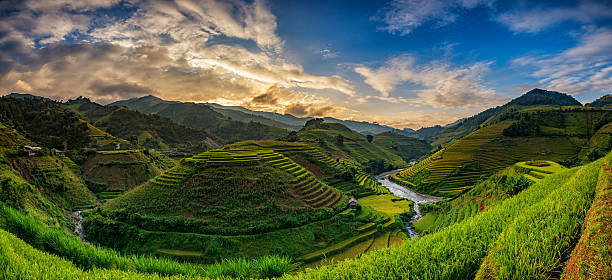 green rice fields on terraced in mu cang chai, vietnam - sa pa zdjęcia i obrazy z banku zdjęć