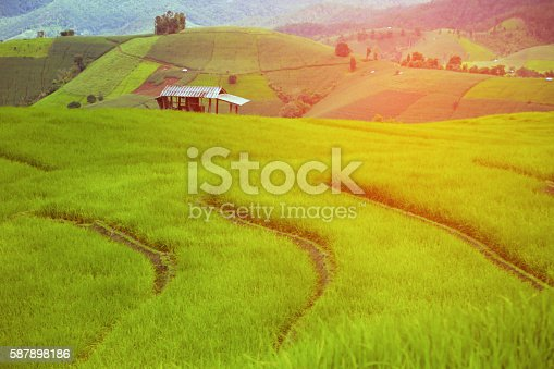 istock green Rice fields on terraced in Thailand, rice field 587898186
