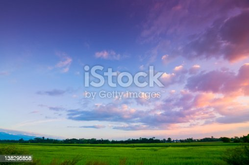 Green rice fild with evening sky