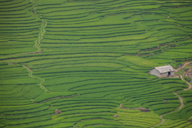green rice terrace in farm on mountain - satoyama scenery stock photos and pictures
