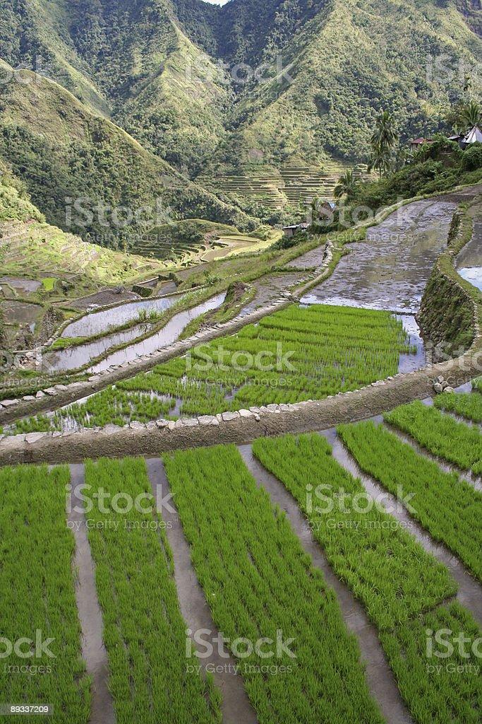 green rice terraces of batad philippines royalty-free stock photo