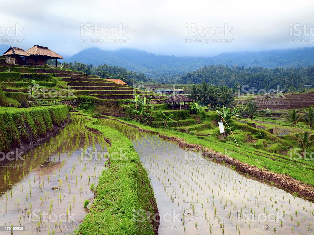 Green rice terraces. royalty-free stock photo