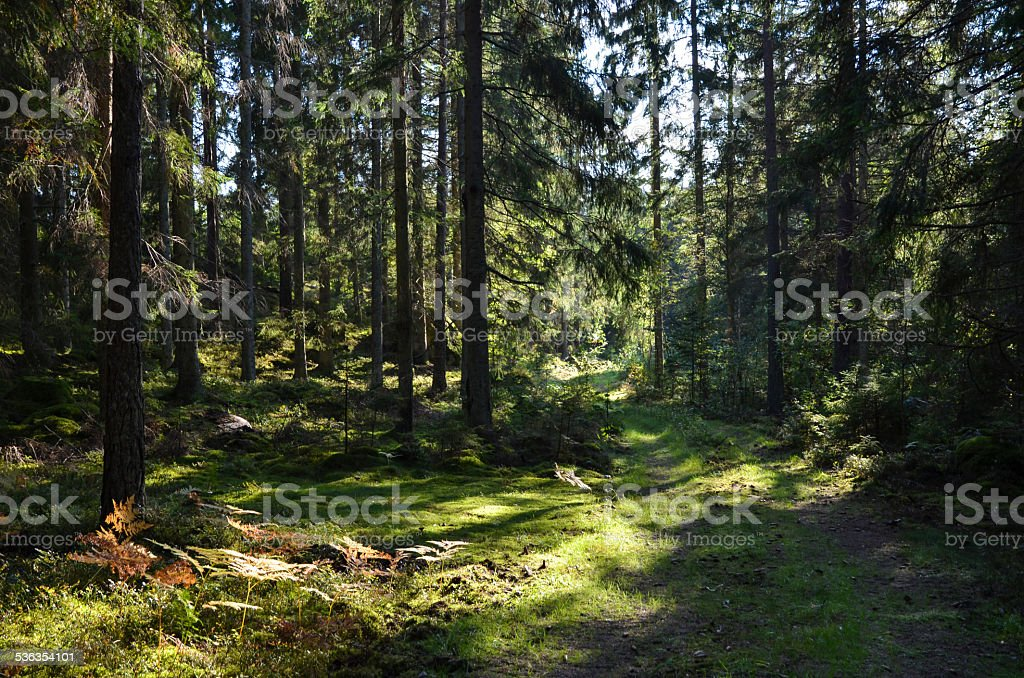 Green road in forest stock photo
