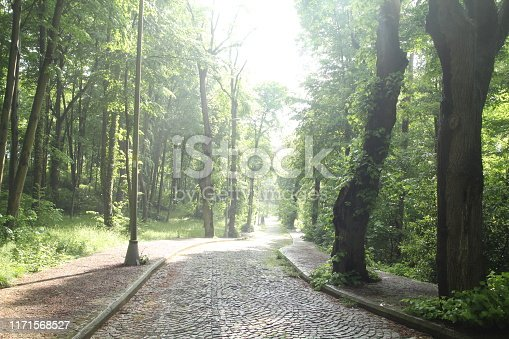 istock green road landscape trees spring forest 1171568527