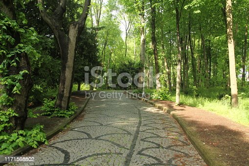 istock green road landscape trees spring forest 1171568802