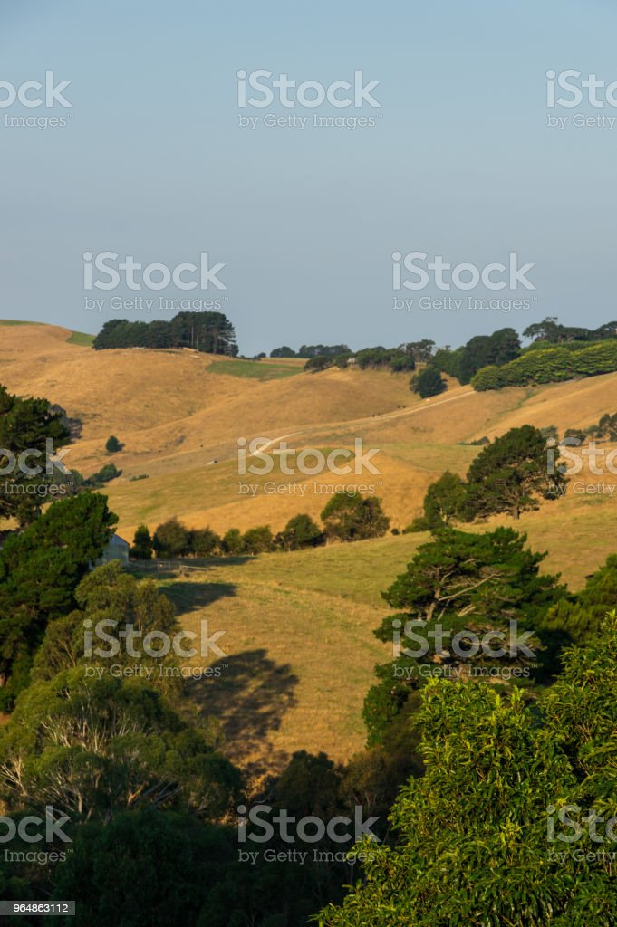 Green rolling hills of South Gippsland in Victoria, Australia. royalty-free stock photo