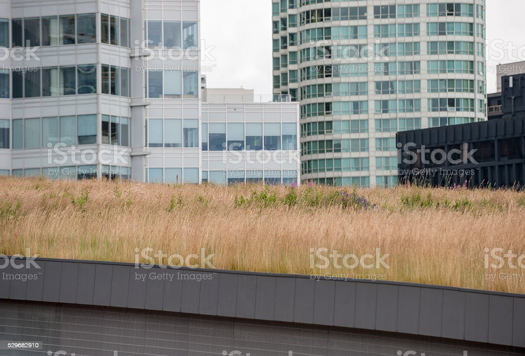 Green Roof In The City stock photo