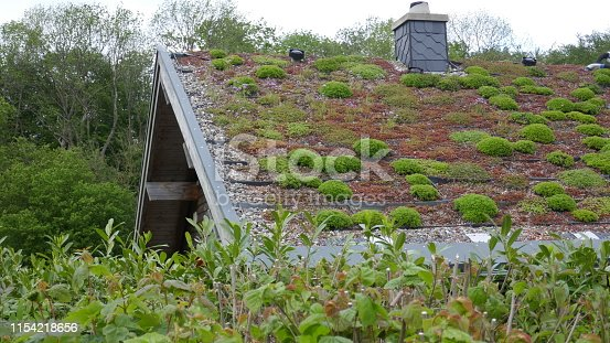 Ecological house with a roof planted with grass and moss.