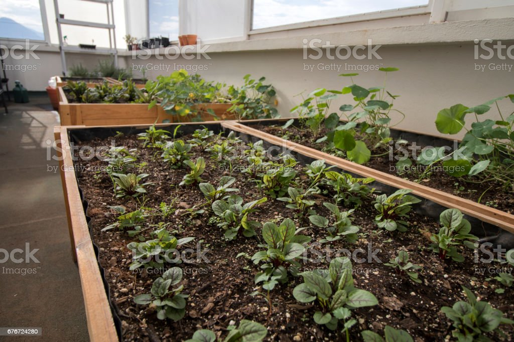 A green roof or living roof