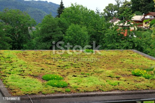 Roof of a buildingn know as living roof. Roof completely covered with vegetation.