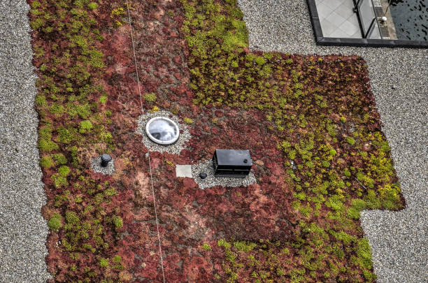 Green roof with roof light Rooftop with gravel and zones of green and purple sedum-like vegatation, as weel as a circular roof light sedum plant stock pictures, royalty-free photos & images