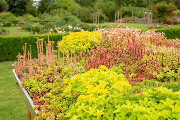 Green roofs Green roof for house and garage sedum plant stock pictures, royalty-free photos & images