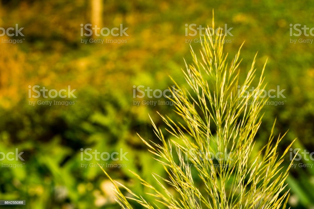 Green Root royalty-free stock photo