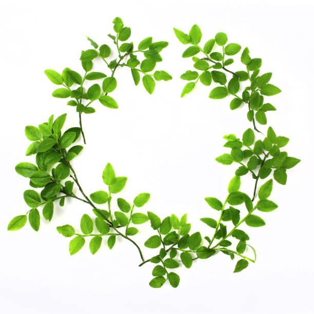 Grüner runder Rahmen mit kleinen Blättern auf weißem Hintergrund. Flach zu legen – Foto