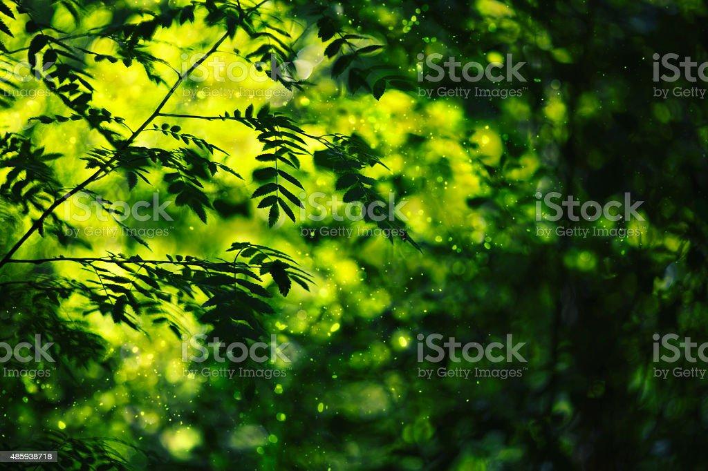 Зеленый лист на rowan blured света боке фон стоковое фото
