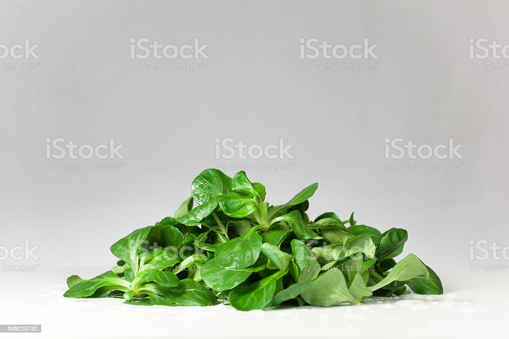 green salad in studio salad -in the studio on a white background Agriculture Stock Photo