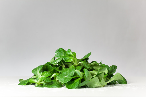 Green Salad In Studio Stock Photo - Download Image Now