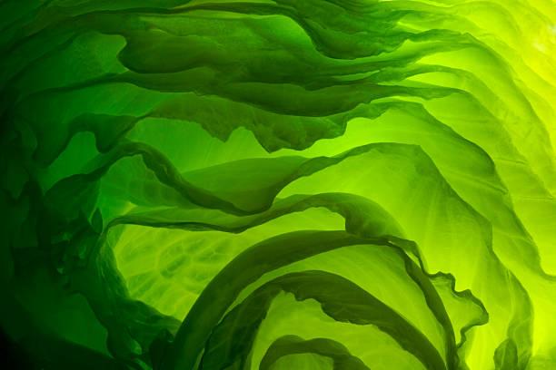 green Salat – Foto