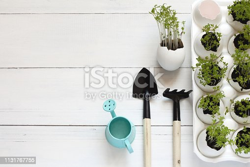 Green salad sprouts growing in the egg shells on the white background. Spring card