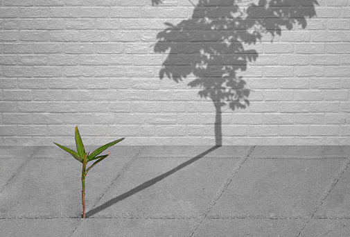 green sapling growing on pavement with shadow of full grown tree, hope concept