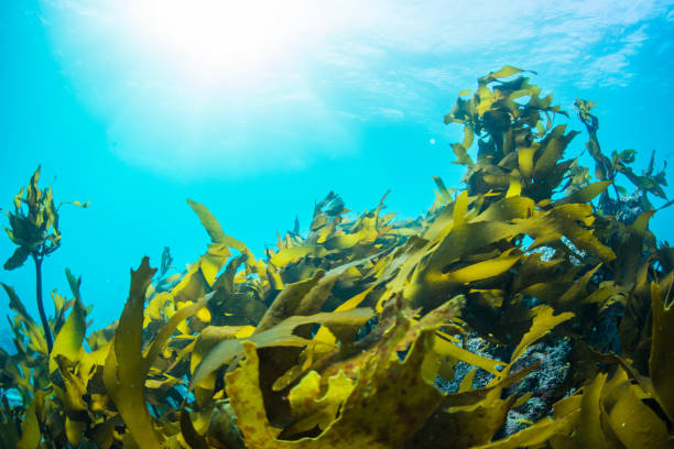 Algas verde - foto de stock
