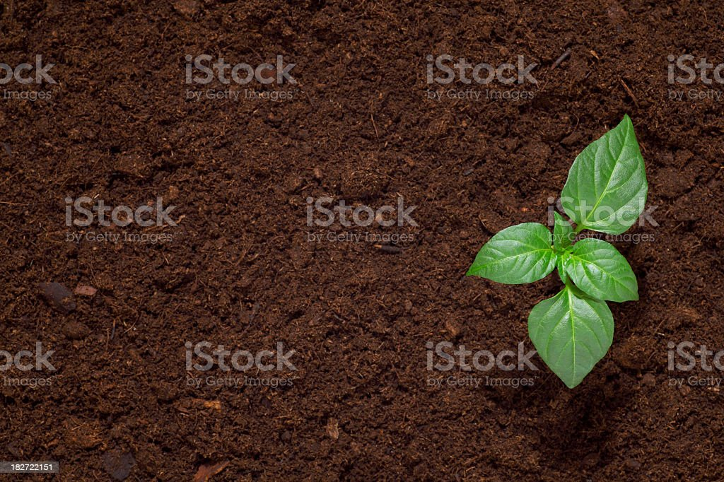 Green seedling sprout in dark dirt stock photo