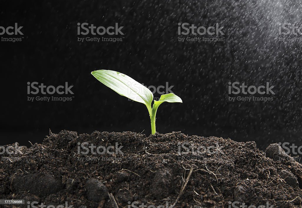 Green seedling with steam royalty-free stock photo