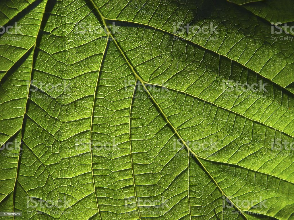 Green sheet royalty-free stock photo