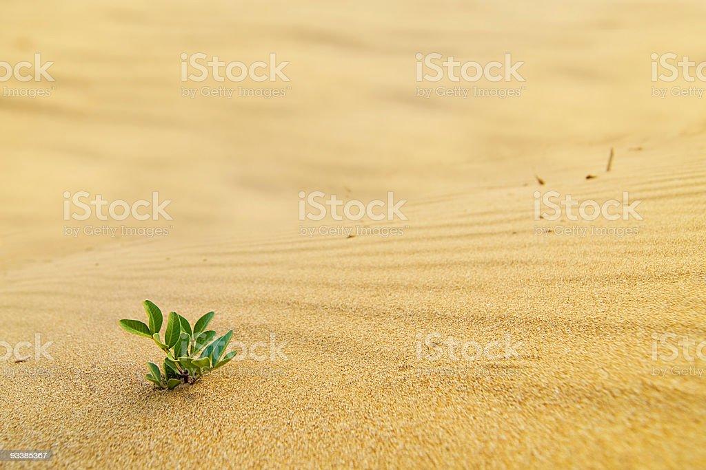 Green shoot in the desert stock photo