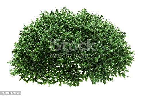 Green Shrub on White Background