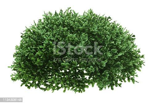 Green Shrub on White Background