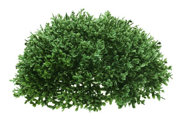grön buske - buske bildbanksfoton och bilder