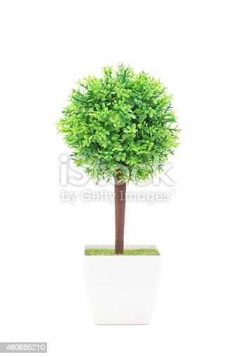 Green small tree