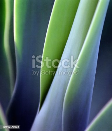 istock Green Smooth Leaves 182665369