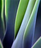 Close-up of a green health plant