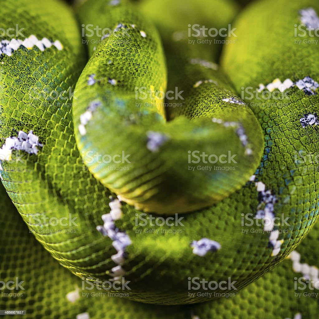 Green Snake Close-up stock photo