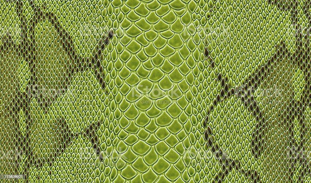 Green Snake Skin royalty-free stock photo