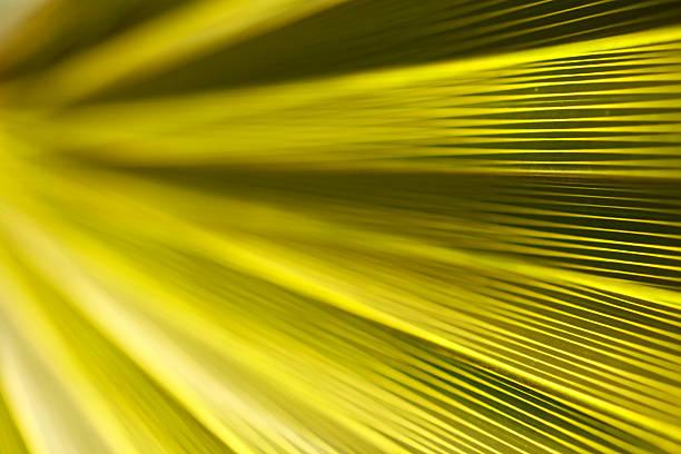 green soft background - 畫畫 動態活動 個照片及圖片檔