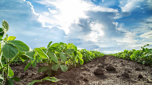 the use of genetic engineering in agriculture and food production Our work bipartisan and herbicides used to control weeds, and therefore improve the efficiency of food production why use genetic engineering if other.