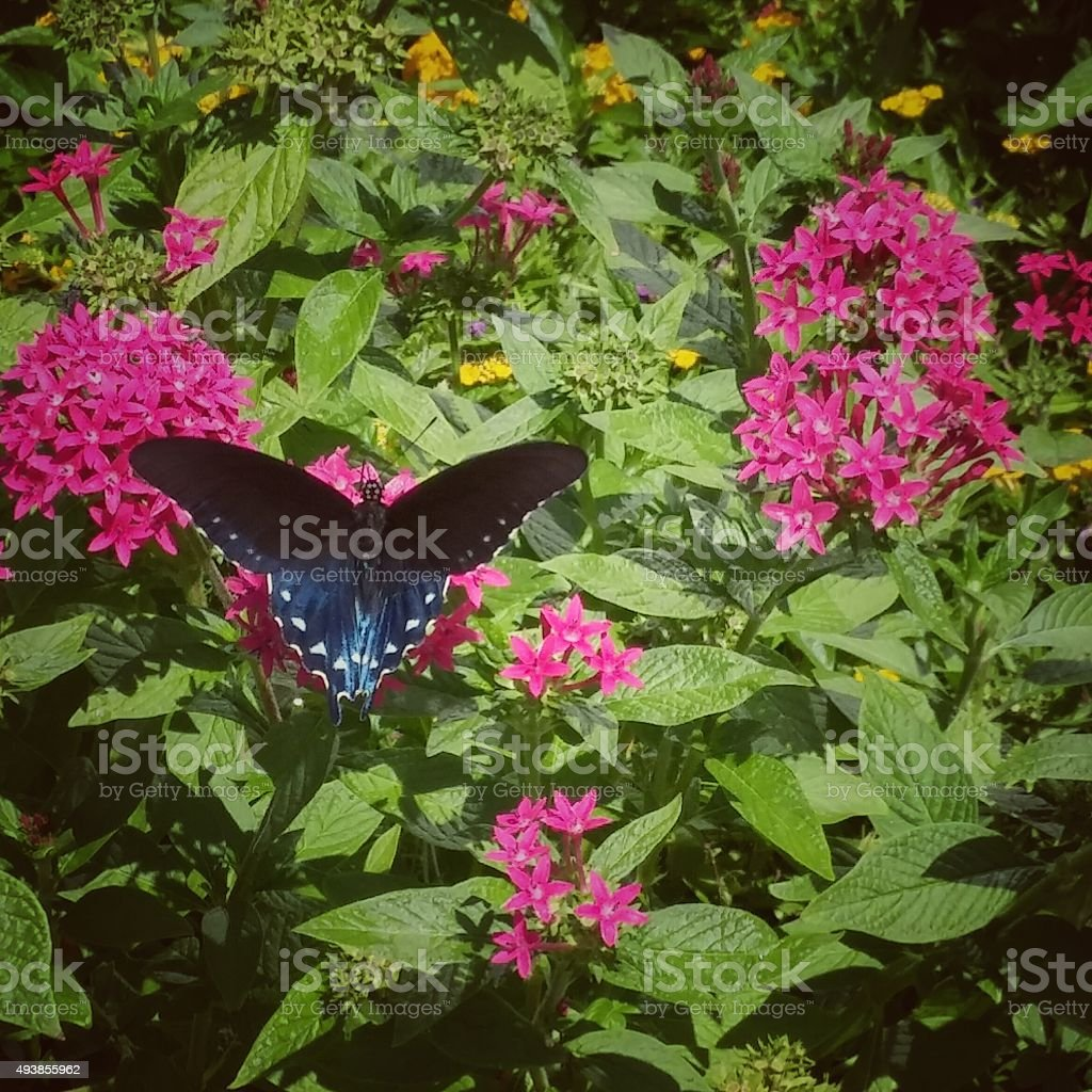 Green Spotted Butterfly Suckling On Pretty Pink Flower Plant Bush